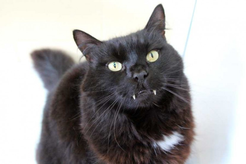 Meet Vampire Cat!  We don't just buy serious stories, we buy funny pet stories too!