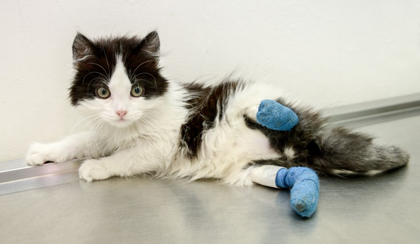 Animal cruelty: Who could hurt a kitten like this?