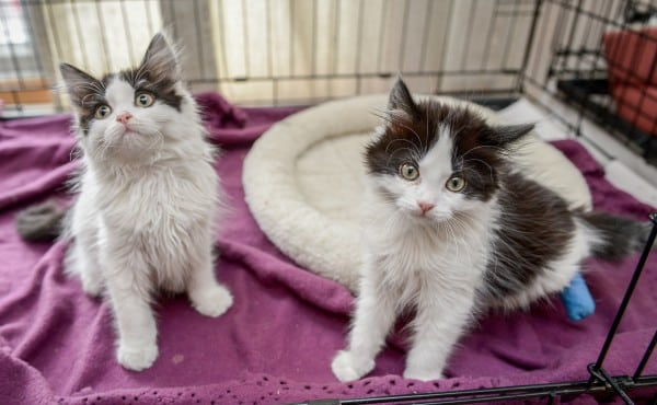 The brothers who were dumped in a cardboard box.